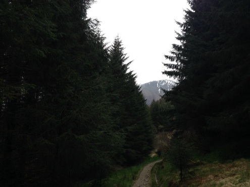 The entrance to the forest with Ben Nevis in the distance.