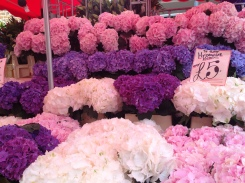 Intoxicating hydrangeas for sale.