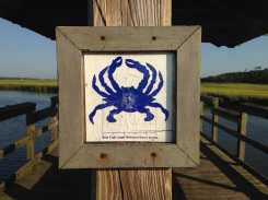 Read the rules of size when catching blue crabs.