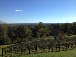 Jefferson's vineyard.